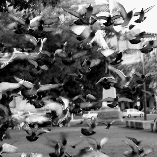 the birds # 2