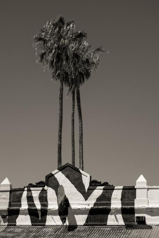 zebra palms