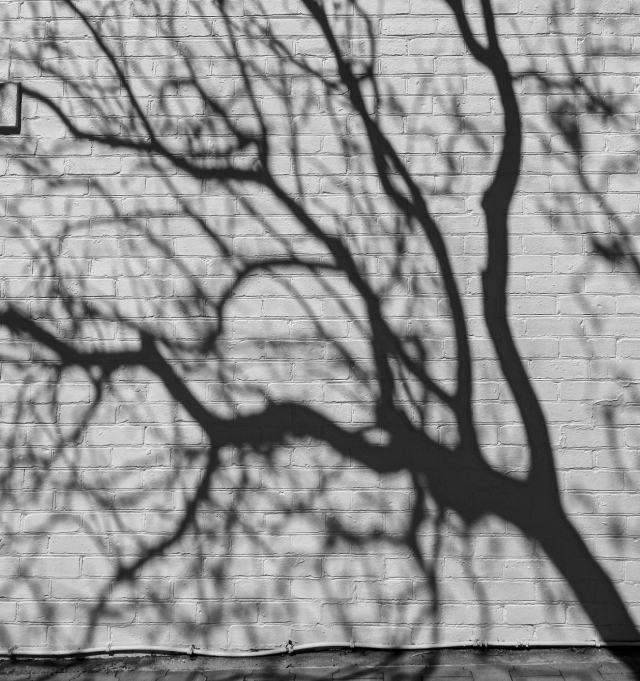tree shadow # 1