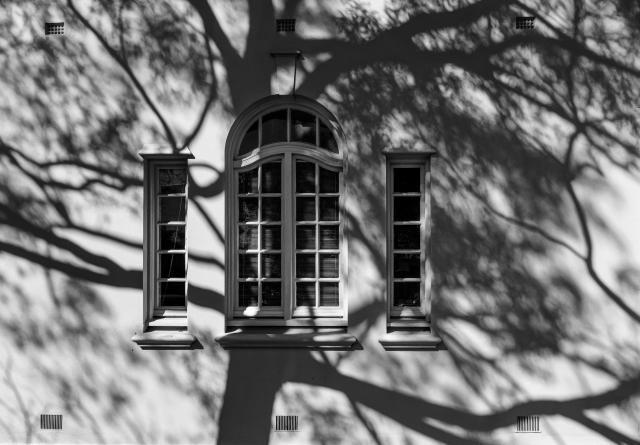 tree shadow # 2
