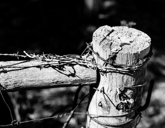 noir fence