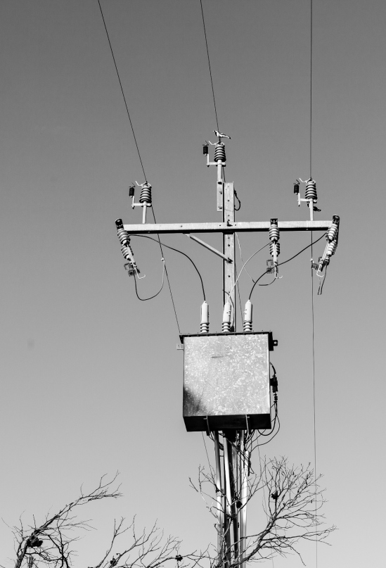 power pole with bird
