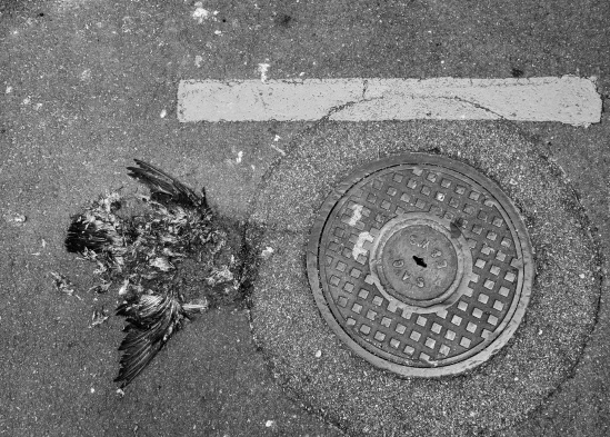 manhole-with-dead-bird