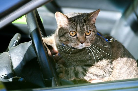cats and cars