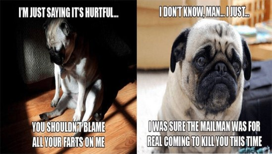 Deep Pug Thoughts That Will Have You Wondering