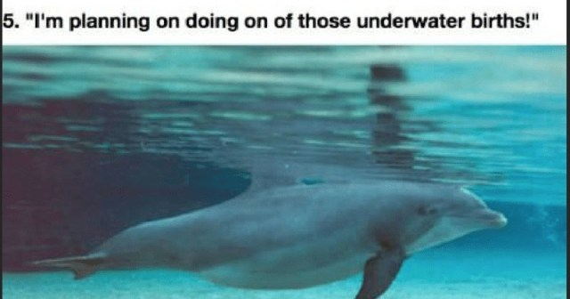 Pregnant Animals That Just Want To Be Parents Already
