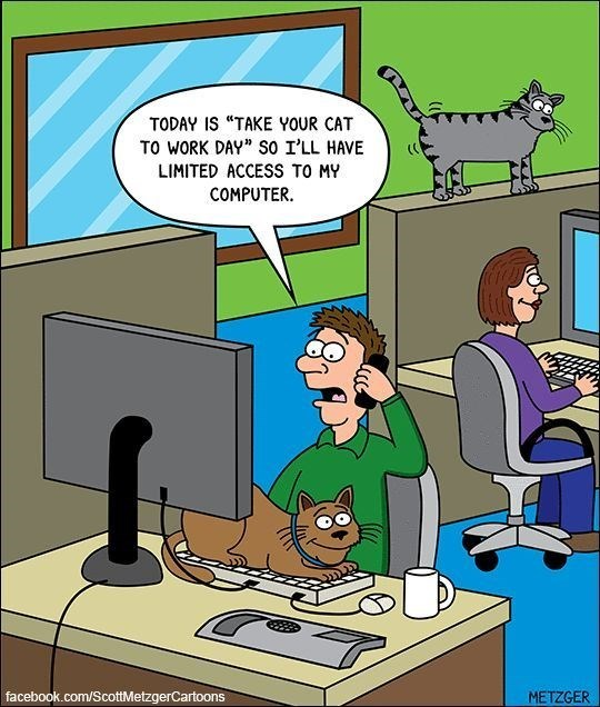 take your cat to work day