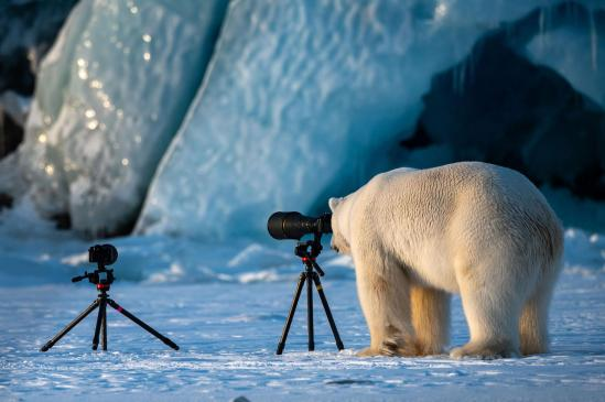 comedy-wildlife-awards-polar-bear-camera.adapt.1900.1