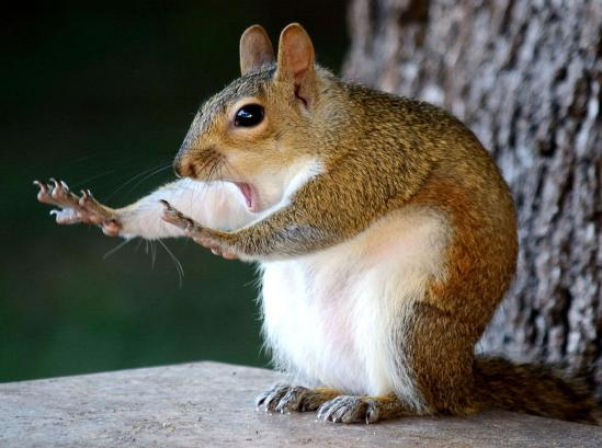 comedy-wildlife-awards-squirel-stop.adapt.1190.1