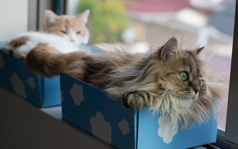 cats in boxes # 2