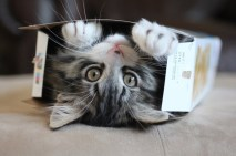 cats in boxes # 3