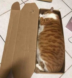 "The laws of physics say, ""The box should be fully filled with a cat."""