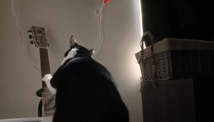 This Cat Wakes Up His Owner Every Day by Playing The Guitar