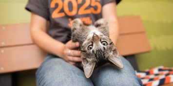 Delaware Becomes The First No-Kill State In The U.S. For Animal Shelters