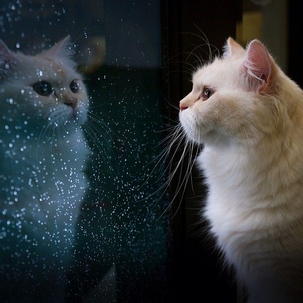 Cat Reflecting On its Life Choices And Life In General