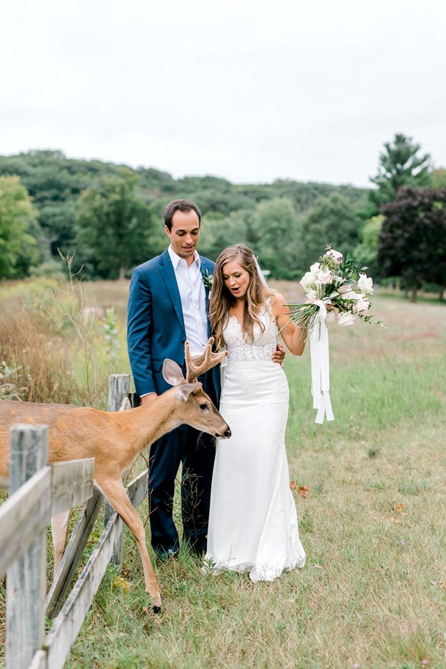 Deer Crashes Wedding And Brings Newlyweds Pure Joy