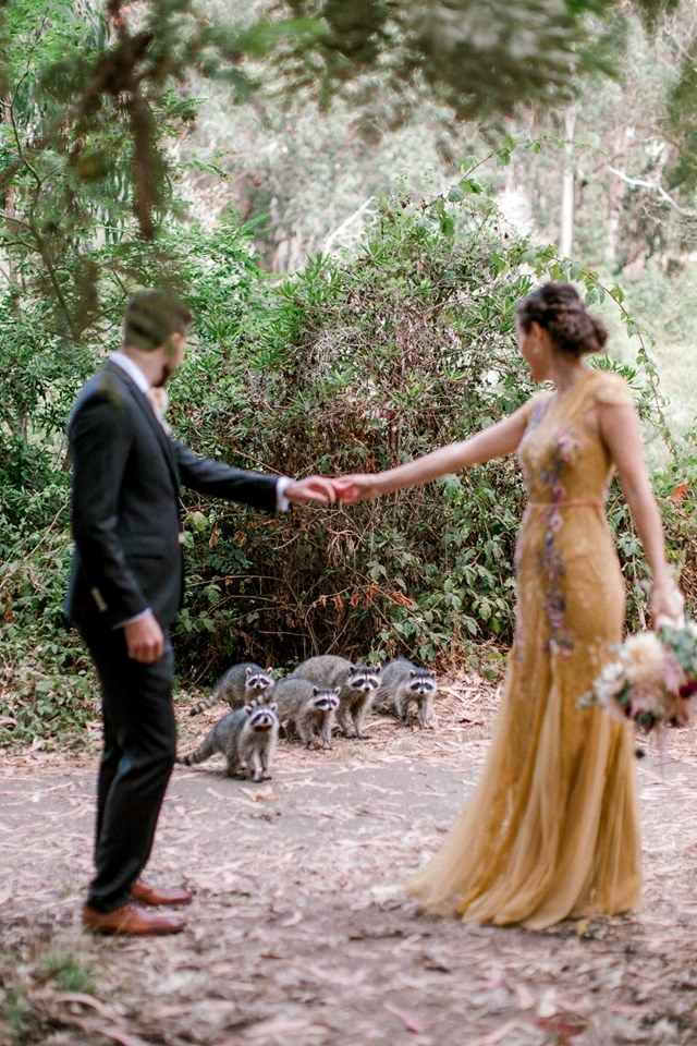 A Couple's Wedding Photoshoot Was Crashed by a Gang Of Raccoons