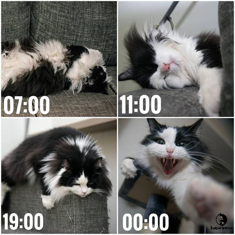Any Cat's Time Schedule