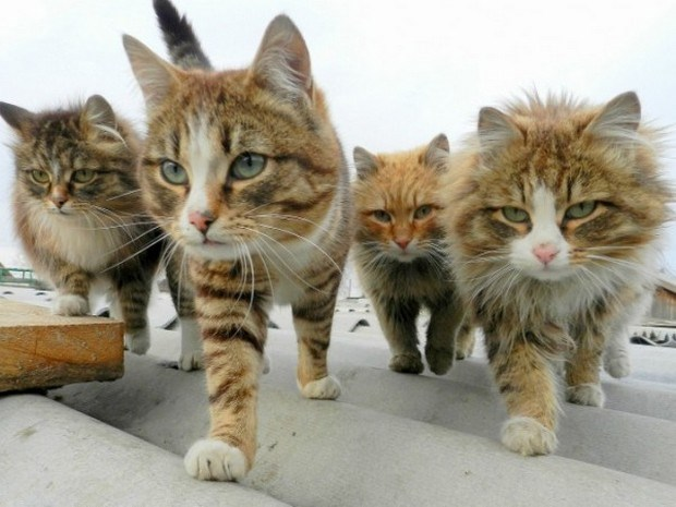 Cat Gangs We Would Love To Meet In a Dark Alley