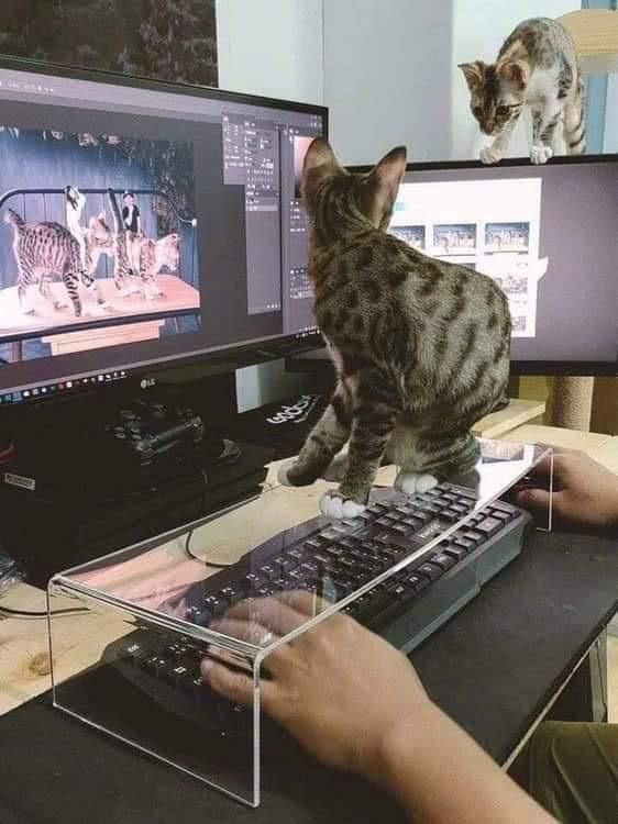 Catproof Your Keyboard With Brilliant Ideas By Cat Owners