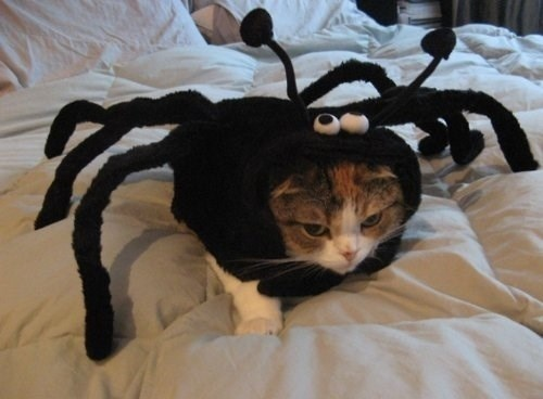 Cats Who Deserve Your Apology Right After Halloween