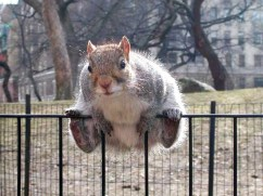 Chubby Squirrels That Have Already Eaten All The Acorns They Could Find