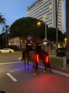 Did You Know There Are Horses With Brake Lights