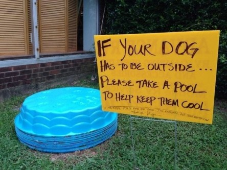 Wholesome Neighbors Who Just Love Their Local Neighborhood Pets