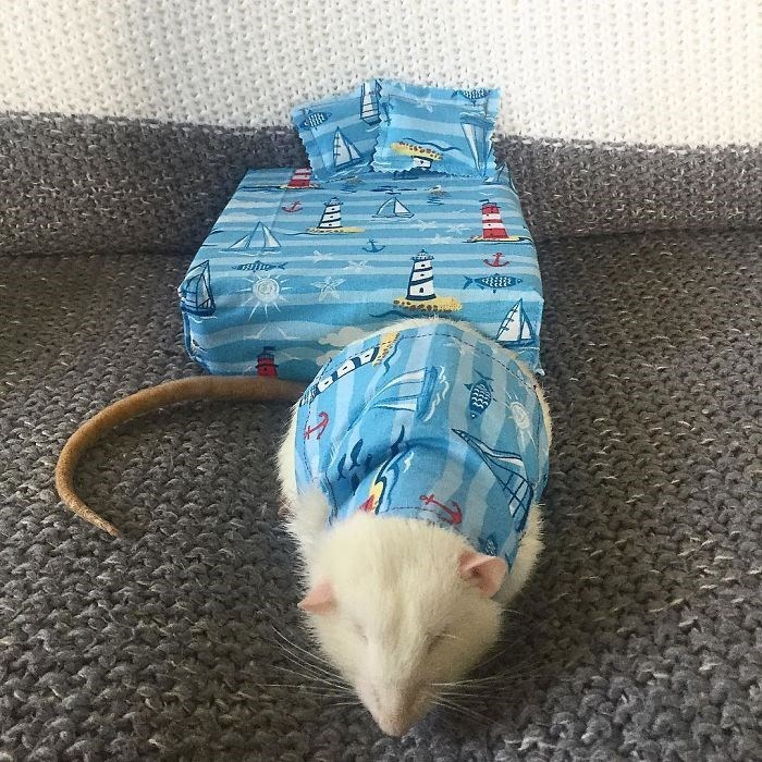 Woman Creates Tiny Mattresses For Rats Including Matching Pajamas