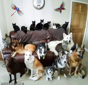 Woman Invests Days And Many Treats To Take a Family Pawrtrait Of Her 17 Cats And Dogs